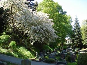 Hauptfriedhof, Frühlingsaspekt