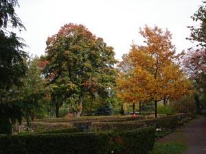 Hauptfriedhof, Herbstaspekt
